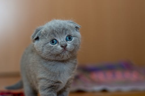 A Connecticut Cat Tax?